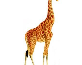 Vintage Giraffe Clipart, Giraffe Clipart, Children's Wall Art
