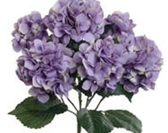 Purple Hydrangea Bunch