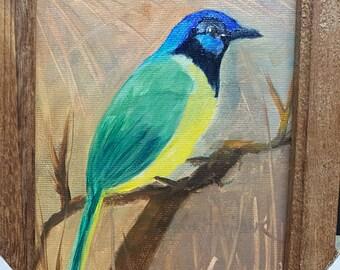 Green Jay Bird   Barbara Haviland Texas Artist