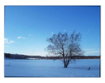 Ice Cold Blue Winter Lonely Tree in Winter Scene in Western NY ... Artistically Enhanced Fine Art Photography