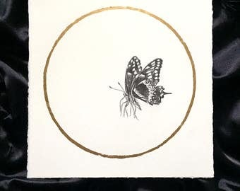 Tiger Swallowtail Butterfly May Flower Moon Original Graphite Drawing with Gold Leaf Inspired by the Native American Full Moon Names