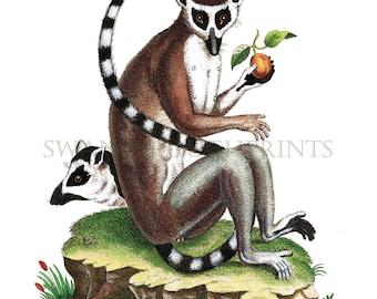 Ring Tailed Lemur Jungle theme Kids bedroom Lemur art print. Gift for Mom Natural History Nature Study Art Gift. Lemur Watercolor Print