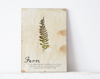 Pressed Herbs- Fern in Frame (3)