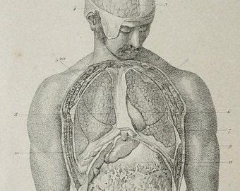 1878 Antique bizarre print of HUMAN ANATOMY. Main Organs. Brain. 139 years old medical engraving