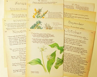 12 Poetry  Book Pages,  The Country Diary of an Edwardian Lady, Paper Ephemera, Junk Journals, Scrapbooking, Collage