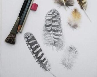 Three Owl Feathers Original Pencil Drawing