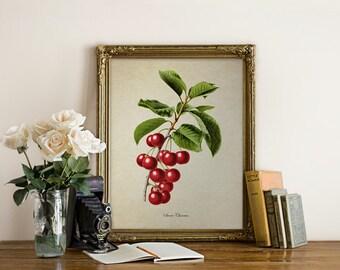 Cherries Botanical Print, Cherry Botanical Print, Home Decor, Natural History Botanical, Cherries Art, Cherry Decorative Reproduction VF015