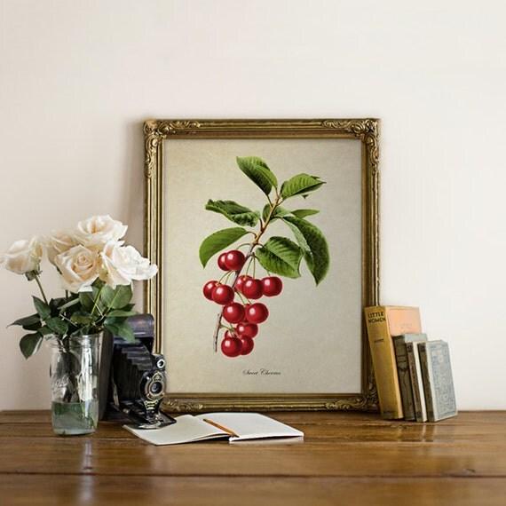 cherries botanical print cherry botanical print home decor