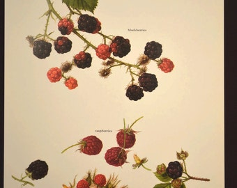 Fruit Wall Art Fruit Decor Kitchen Wall Art Berries Berry