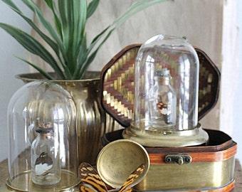 Vintage Brass And Glass Specimen Display Dome Terrarium