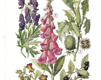 Lithography antique botanical print flowers
