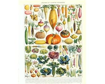 1933 Vintage Vegetables Print. Kitchen Poster Retro. Larousse Book Plate. Veggie Chart Food Science Wall Art Home Decor