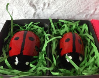 Bugs in a box.
