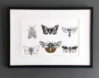 A4 Moths Print with Gold detail