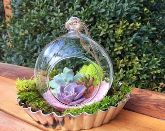 Hanging terrarium/succulent terrarium/hanging planter/succulent garden/succulent wedding decor/succulent planter/Succulents