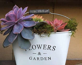 Succulent planter/white/shabby chic/planter/succulent arrangement/metal planter/cactus planter/hanging  planter/succulents/indoor garden