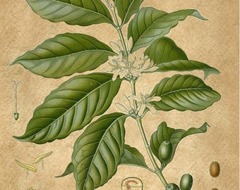 Wholesale Botanical 18 Print listing pick your background for the prints  WHOLS405