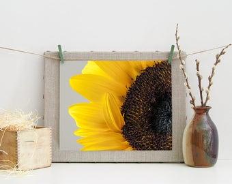 Yellow Sunflower Photograph - Fine Art Wall Decor - Flower Art - Apartment Decoration