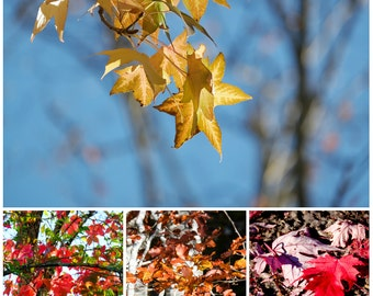 Photography - Collector's Edition limited to 30 copies - autumn leaves