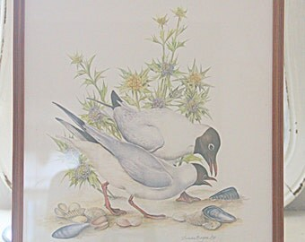 Vintage Seagull Print Under Glass, Seagull Drawing, Wooden Frame, Ilustrater Dieter Boger