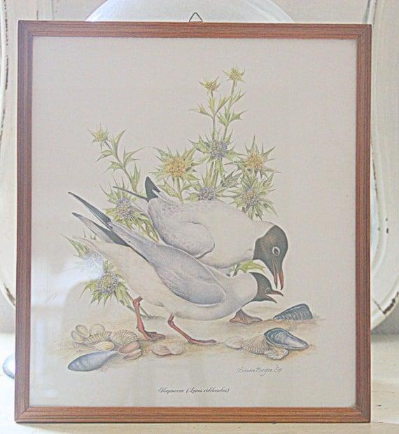 Vintage Seagull Print Under Glass, Seagull Drawing, Wooden Frame, Ilustrater Dieter Boger