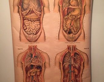 Vintage American Froise Anatomical Chart