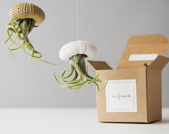 Air Plant Jellyfish Planters, White And Gold Decor, Hanging Air Planter, Housewarming Gift, Sea Urchin Air Plant, Wall Hanging Air Plant