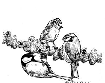 Coal Titmouse and blue titmouses to peanut pendulum, original illustration