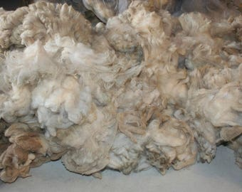 Cheviot raw fleece