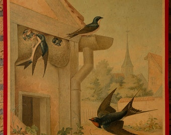 Vintage  Old Print on cardboard  Swallow School Chart Lithograph