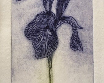 Iris Print - Original Limited Edition Etching