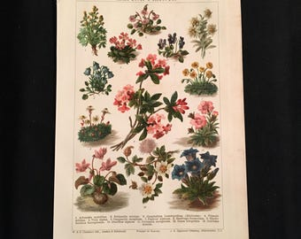Alpine Plants - Original Vintage Print,  Antique Color Lithograph, Natural History Print