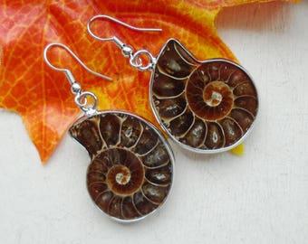 Plated Ammonite fossil, earrings, earrings, silver