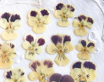 Dried Flowers Yellow Flowers Viola Hellenment;Violas;Real Violas;Real Flowers;Pansies;20 Flowers;Pressed Flowers;Craft Supply;Flower Art