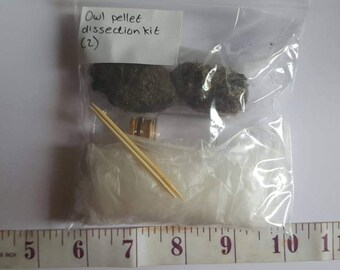 Owl pellet dissection kit  (2)
