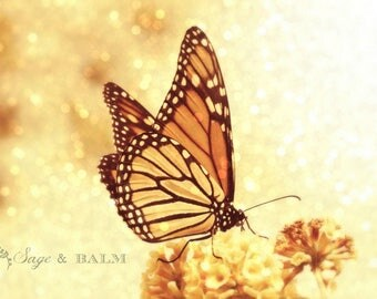 Beautiful soft orange and black Monarch butterfly fine art photography print, bokeh, macro, nature, dreamy, romantic, gift idea, wedding
