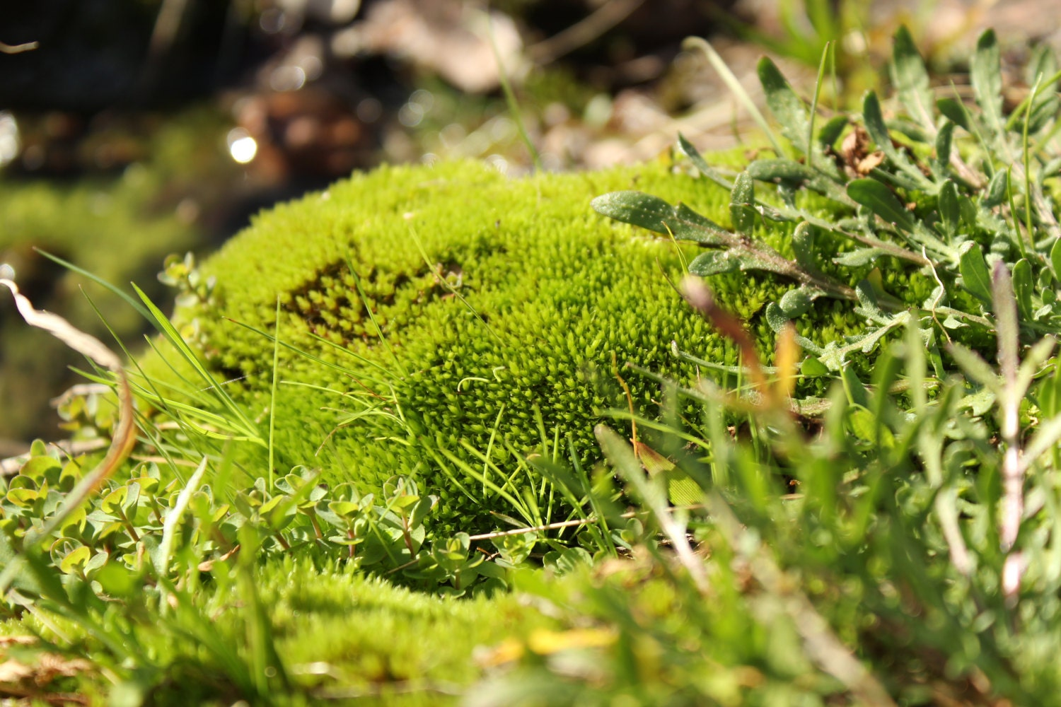 Moss By The River