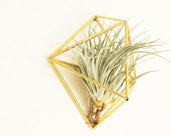 Himmeli Wall Ornament - Indoor planter - Geometric - Himmeli Mobile - Minimalistic - Air plant holder - Modern home decor - Wall planter