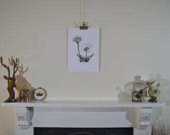 Hand-drawn dandelion illustration