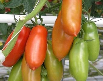San Marzano Heirloom Tomato Seeds 30 seeds Non GMO