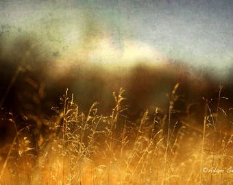 Nature,Landscape Photography,Panoramic,Amber color,Abstract,Wall Art,Wall Decor