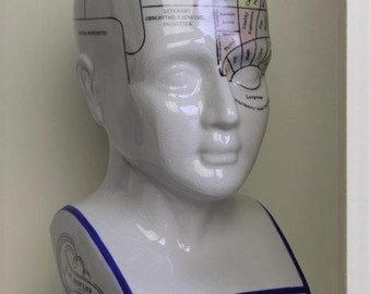 Phrenology Head porcelain medical study bust rarity cabinet of curiosities butterfly taxidermy present doctor vintage