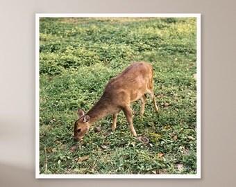 Deer Prints, Woodland Nursery, Woodland Nursery Wall Art, Nursery Fine Art Photography, Woodland Nursery Photography, Wildlife Photography