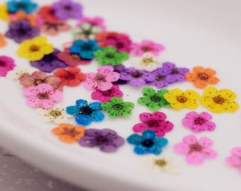 24 pieces per package 0.6-1cm little Narcissus real dried flowers Pressed flowers natural flower in Vacuum drying package, Nail stickers