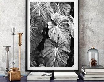 Elephants Ear Leaves Print, Black and White Photography, Tropical Print, Print, Botanical Print, Wall Art, Posters, Prints, Photography,125b