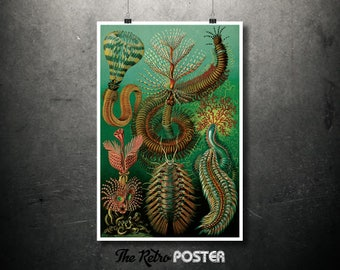 Chaetopoda (Worms) - 1904 English as Art Forms in Nature by Ernst Haeckel - Botanical Poster Vintage, Kitchen Decor, Dining Room Art