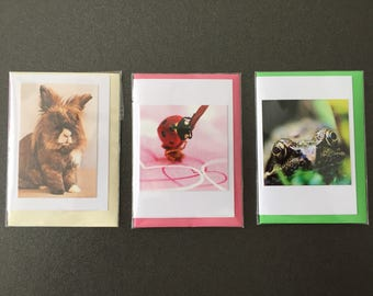 Set of mini cards/flowers cards of animals. Rabbit, ladybug, frog.