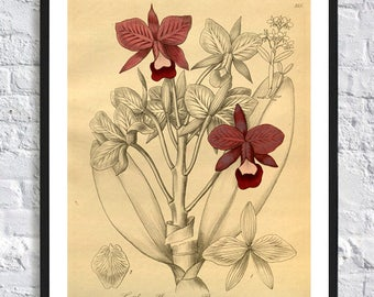 Orchid print flowers print wall art decor gallery art botanical illustration home office decor poster vintage illustrations posters dark red