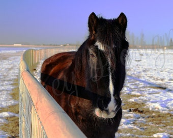 Horse Print, Horse Photo, Equine Photo, Bay Horse, Dark Brown, Animal Print, Animal Photo, Nature Photo, Nature Print, Farm Animal, Sunset