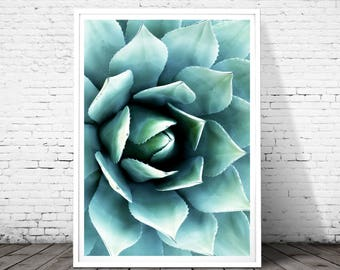 Cactus, Cactus Print, Succulent, Succulent Print, Cactus Wall Art, Green Print,Cactus Art, Cactus Poster, Cactus Photography, Cacti